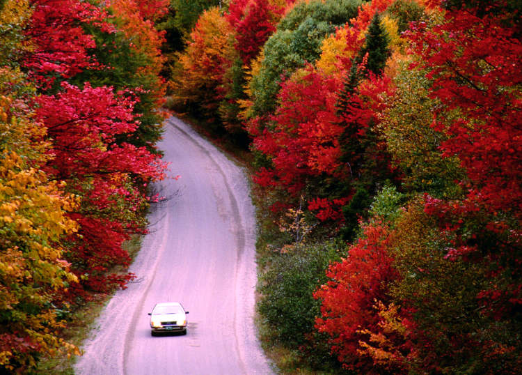 Fall Foliage Road Trips Tips