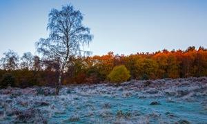 Sunrise over Clumber park, Nottinghamshire.